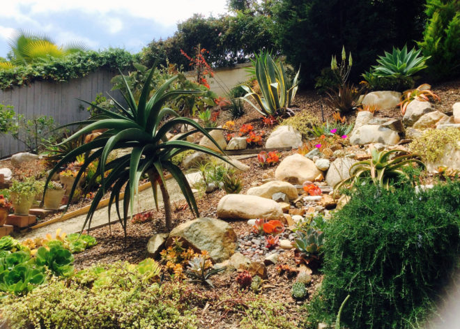 How to plant a hillside with succulents and low water shrubs