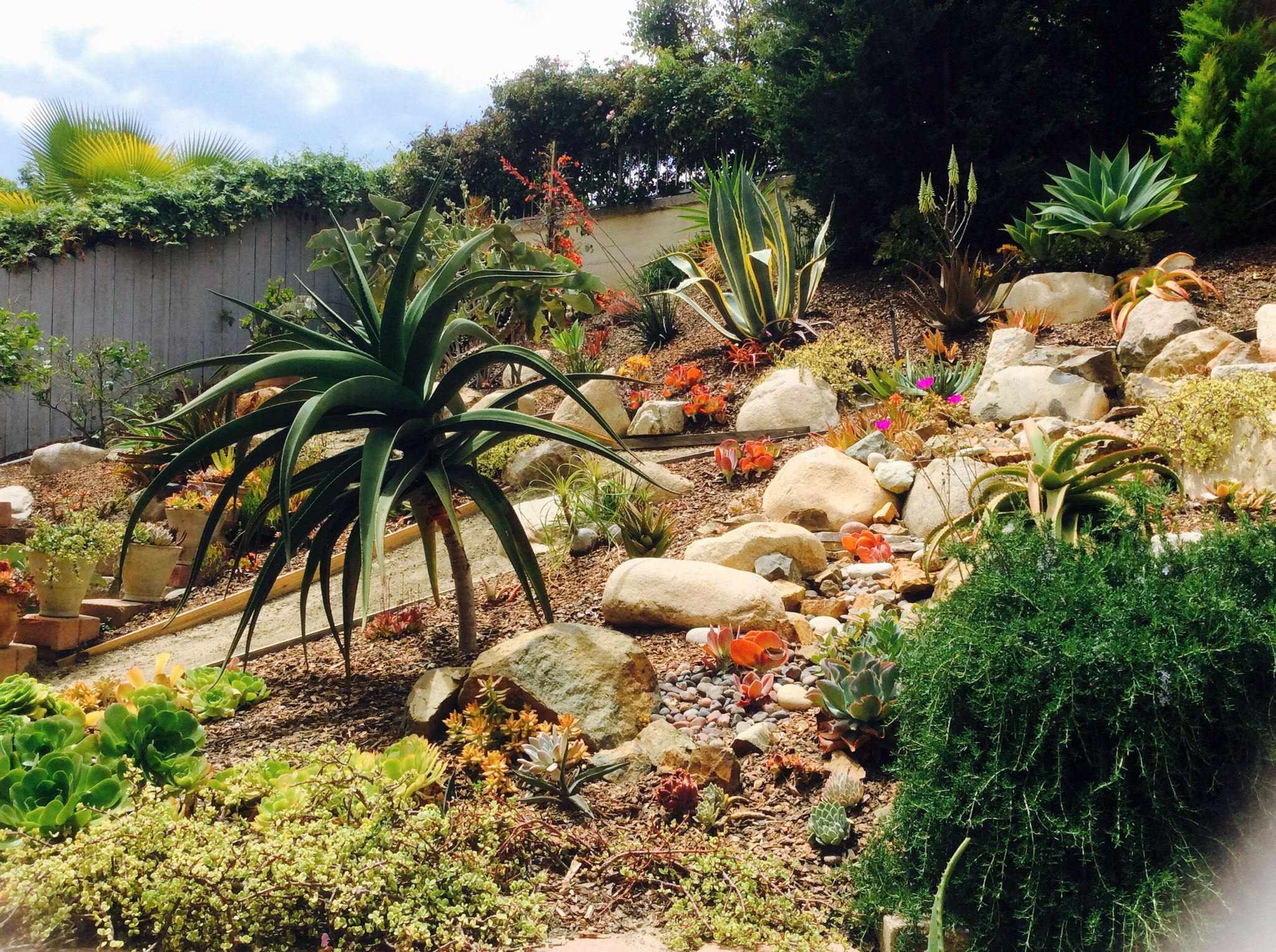 How to plant a hillside with succulents and low water shrubs for Ideas for low water landscapes