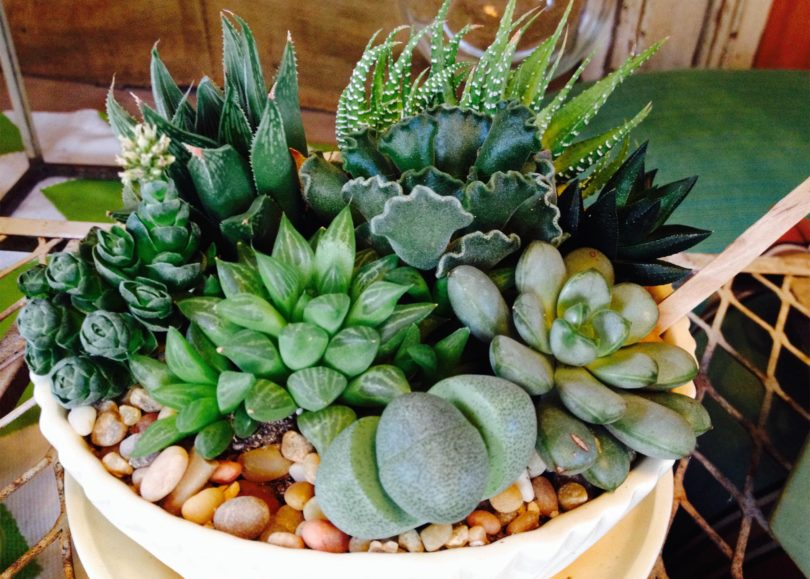 Watch Foolproof Ways to Keep Your Succulents Alive andThriving video