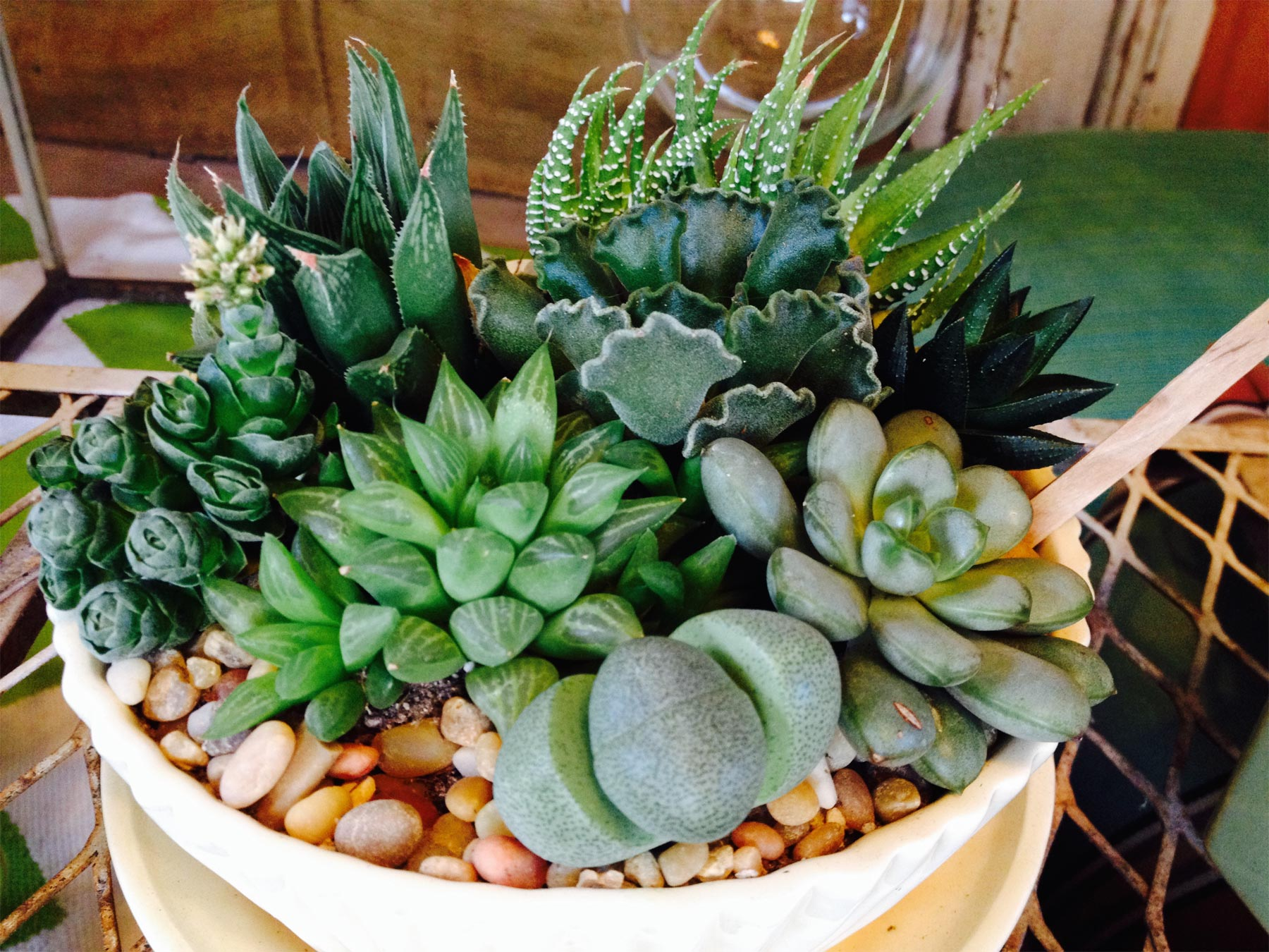 succulents for interior