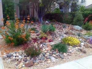 Succulents and low water shrubs