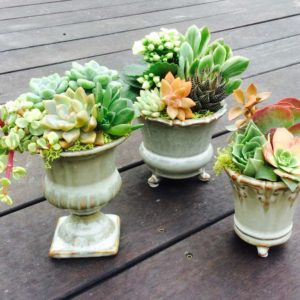 Chicweed - Custom Ceramic Urns