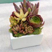 FloralOvals_CubeSmall