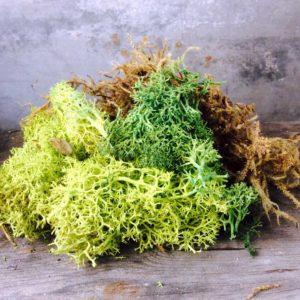 Chicweed - Moss Ebellishments