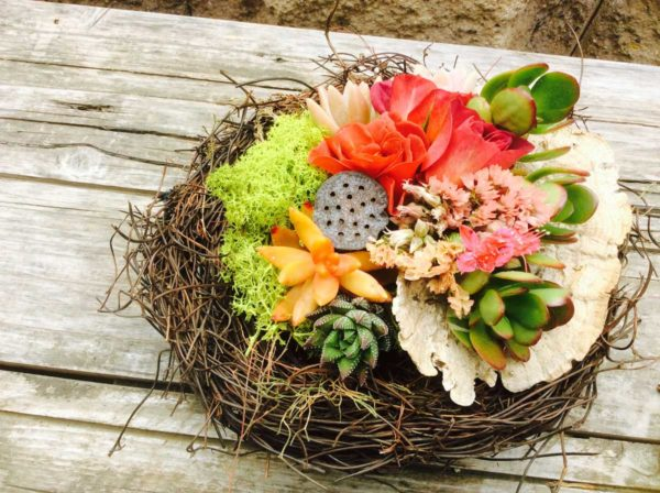 Chicweed - Nest with Succulents & Floral