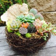 Chicweed - Nest with Succulents & Embellishments