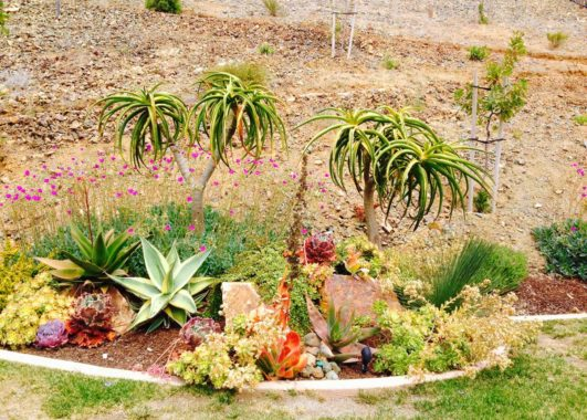 Landscape with Drought tolerant plants