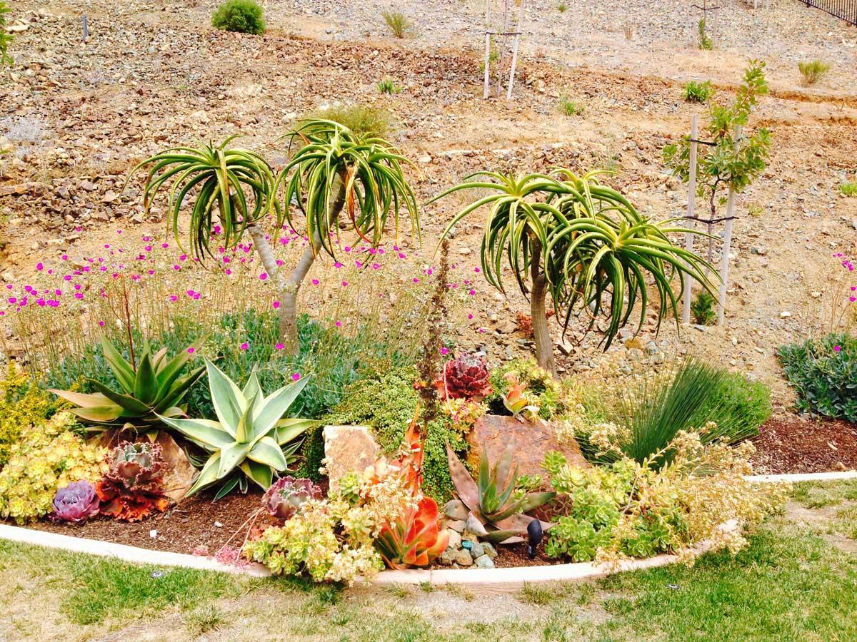 Landscape with drought tolerant plants cw design and - Drought tolerant plants landscape design ...