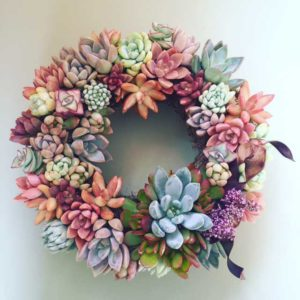 Chicweed - Succulent Wreath