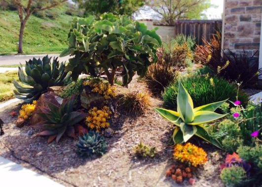 Colorful Lawn Replacement with Succulents