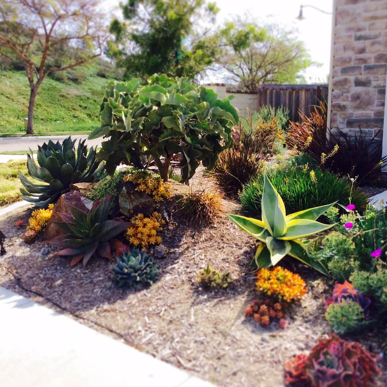 Landscape socal lawn replacement for Garden design instagram