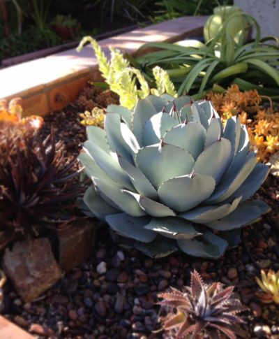 Succulent Raised Bed Garden