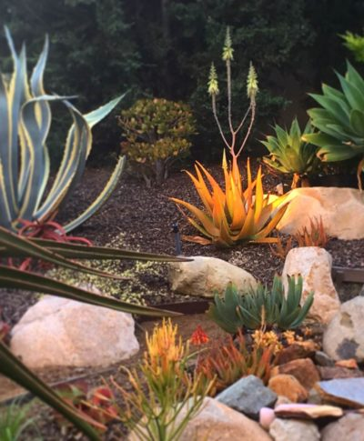 Year around color Succulent Garden