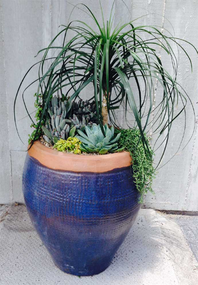 cw_gallery_blueSucculent_ContainerBy-CWDesignLandscaping