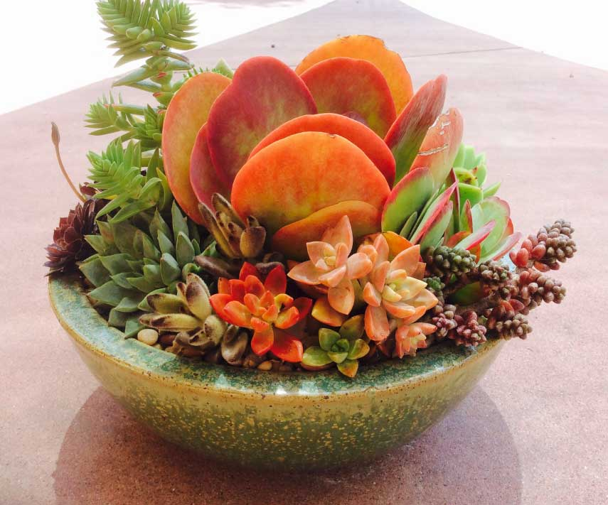 cw_gallery_vibrantSucculentContainerGardenBy-CWDesignLandscaping