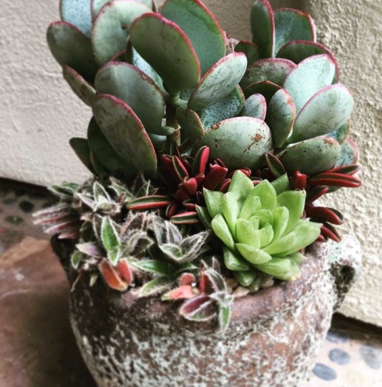 cw_gallery_vintageTextureSucculentBy-CWDesignLandscaping